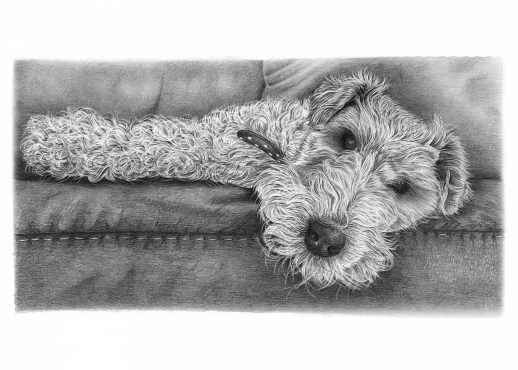 Pencil Drawing of Airedale Terrier Dog