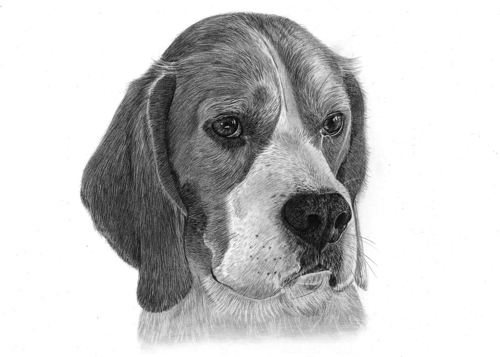 Dog Drawings by Angela of Pencil Sketch Portraits