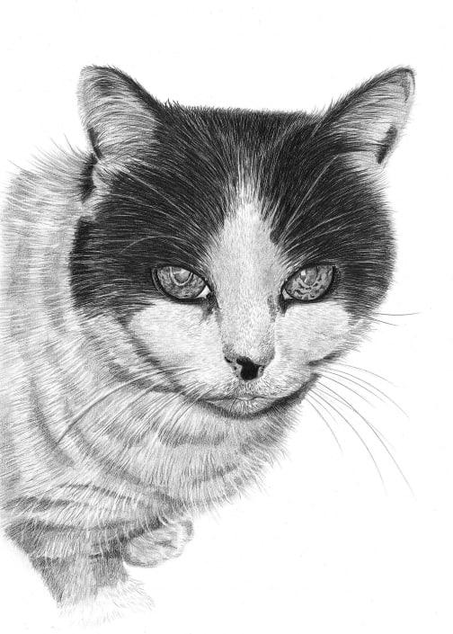 Pencil Portrait of Cat
