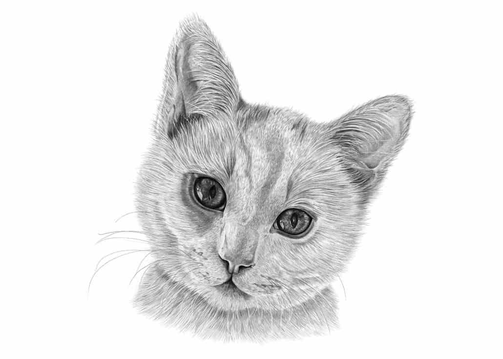 Portrait Drawing of Cat