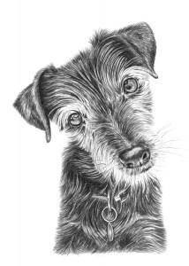 Pencil Portrait of Dog