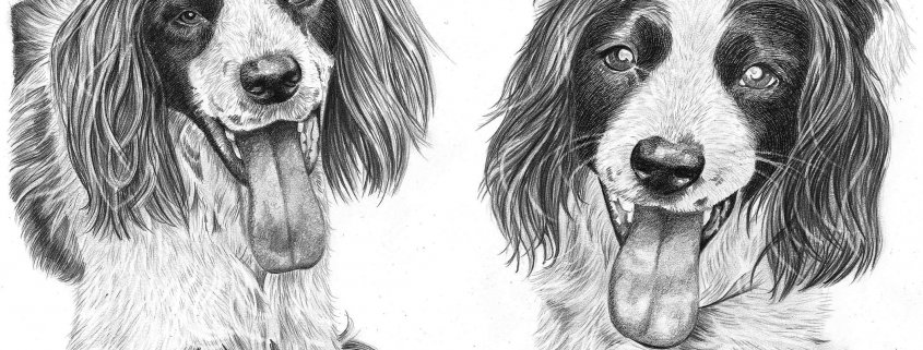Pencil Drawing of Two Dogs