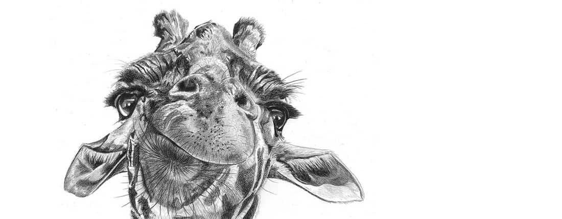 Drawing of Giraffe