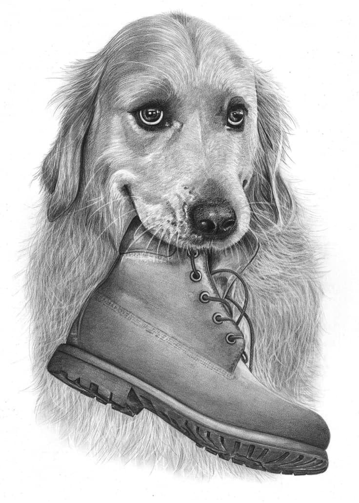 Pencil Drawing of Golden Retriever Dog