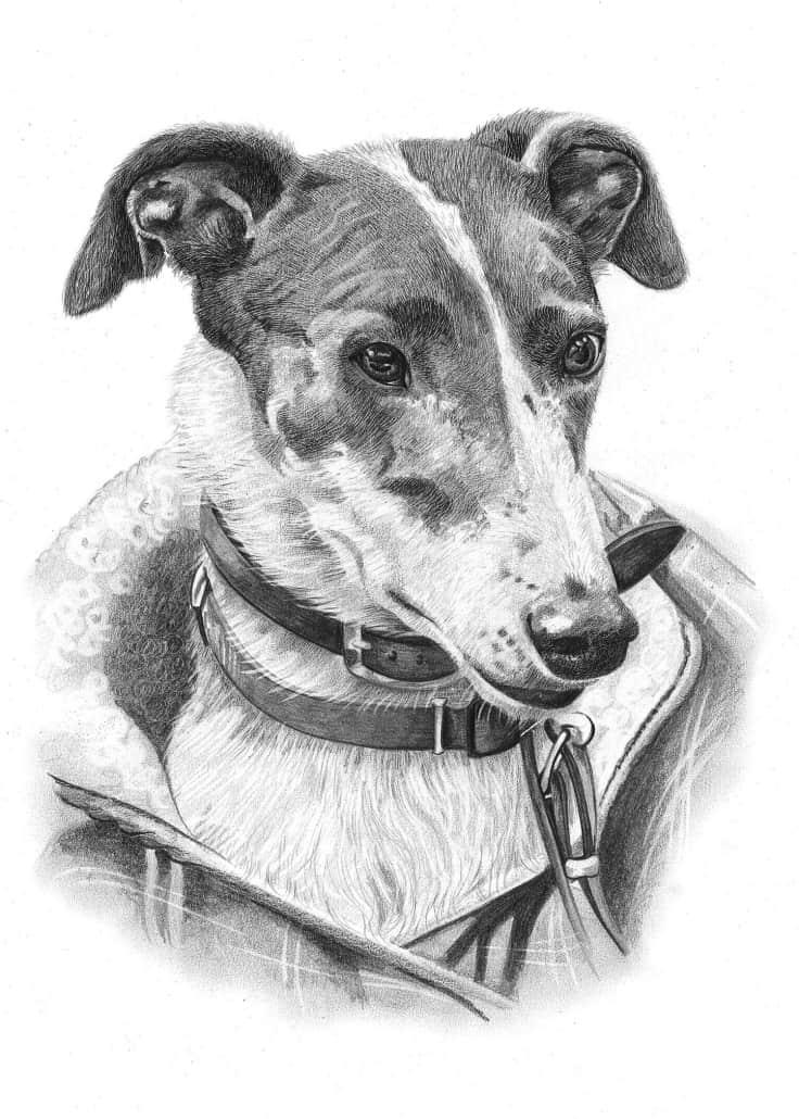 Pencil Drawing of Grey Hound Dog