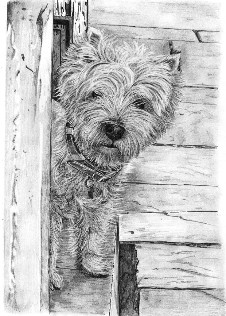 Pencil Drawing of Highland Terrier Dog