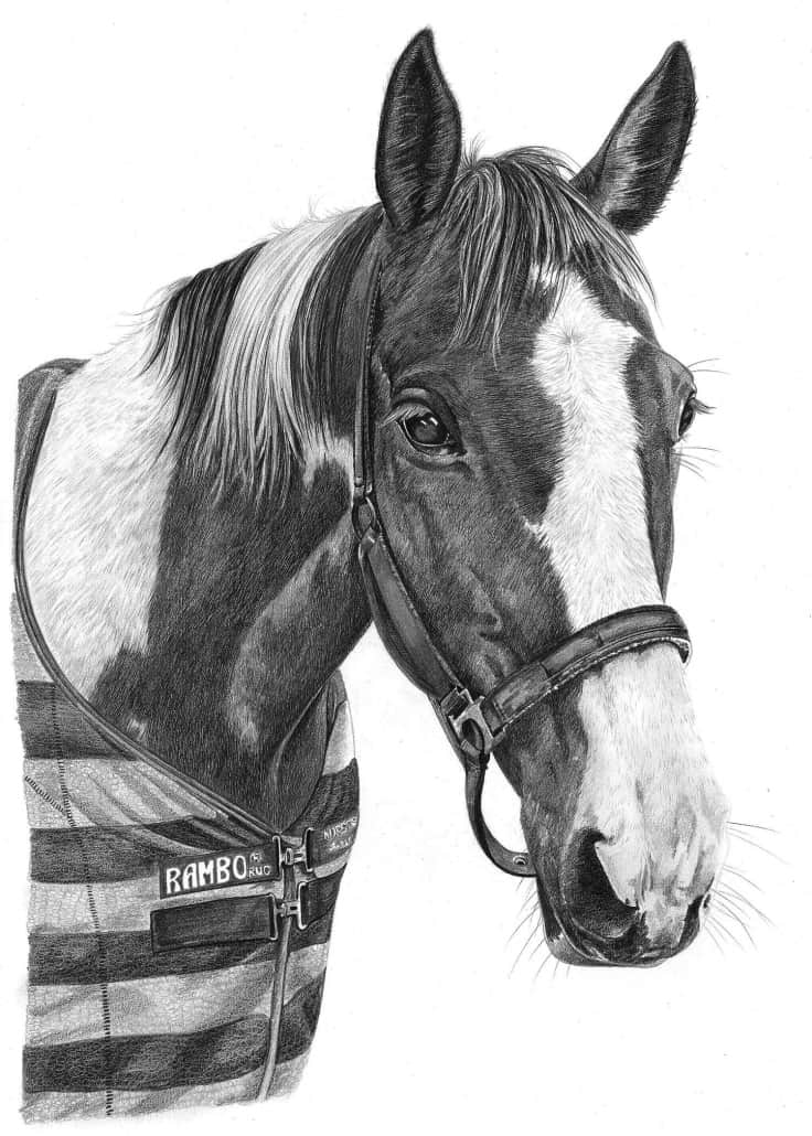 Pencil Drawing of Horse 2