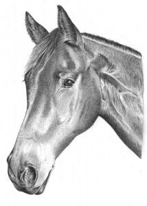 Pencil Portrait of Horse