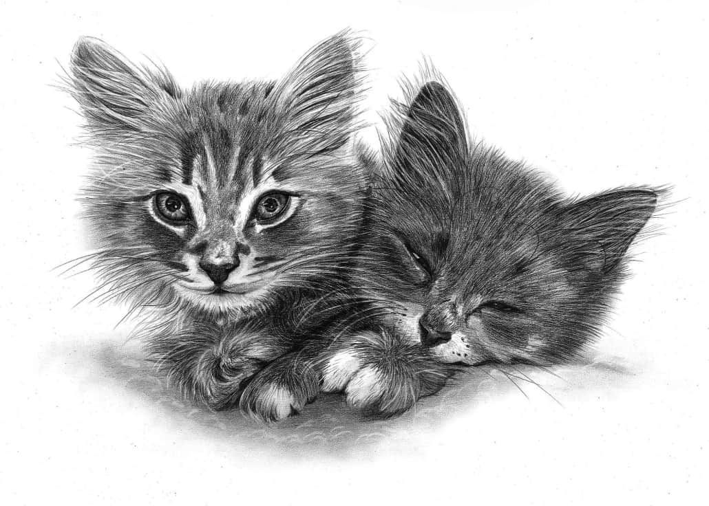 Pencil Pet Portraits From Photos