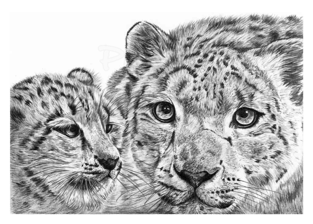 Pencil Drawing of Snow Leopard with Cub