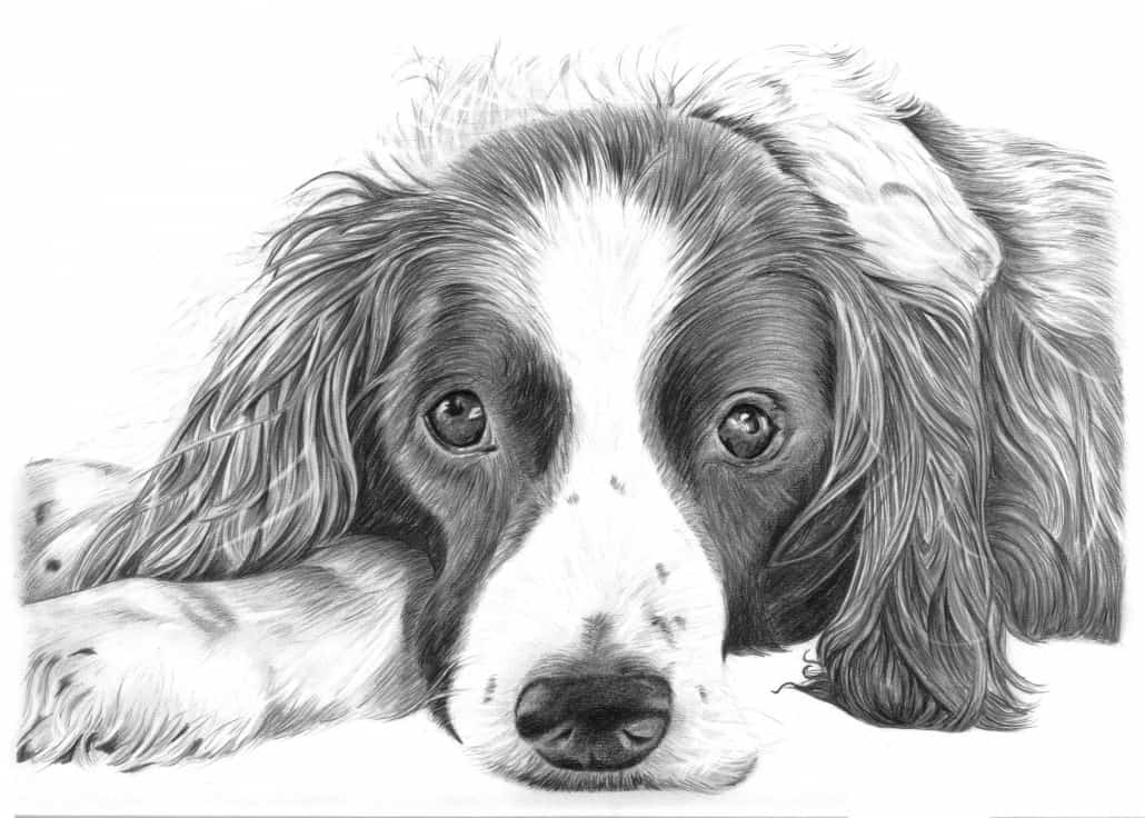 Pencil Drawings of Dog and Puppies from Your Photos for Sale