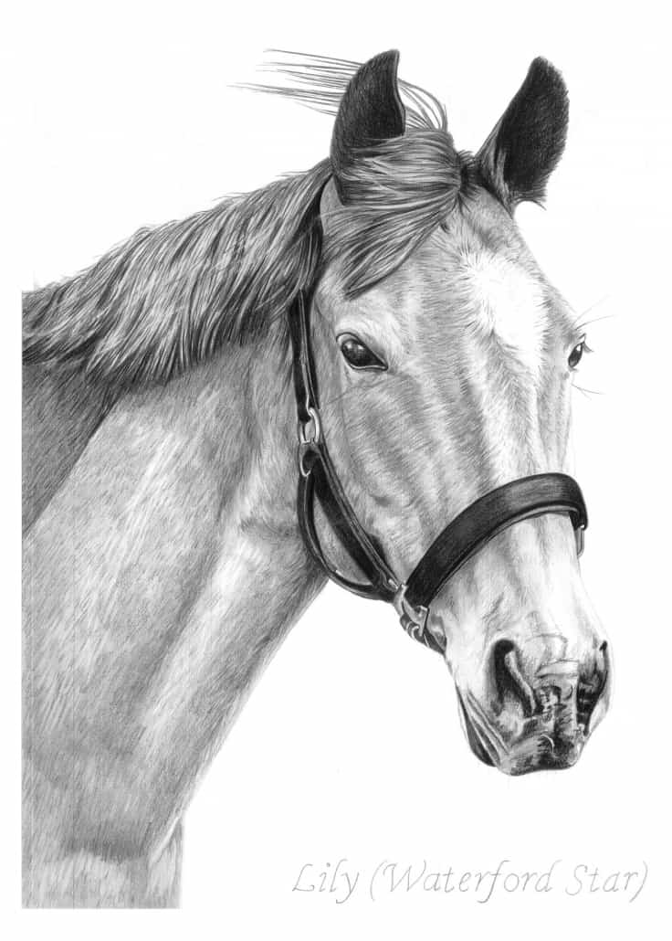 Horse Drawings By Angela Of Pencil Sketch Portraits
