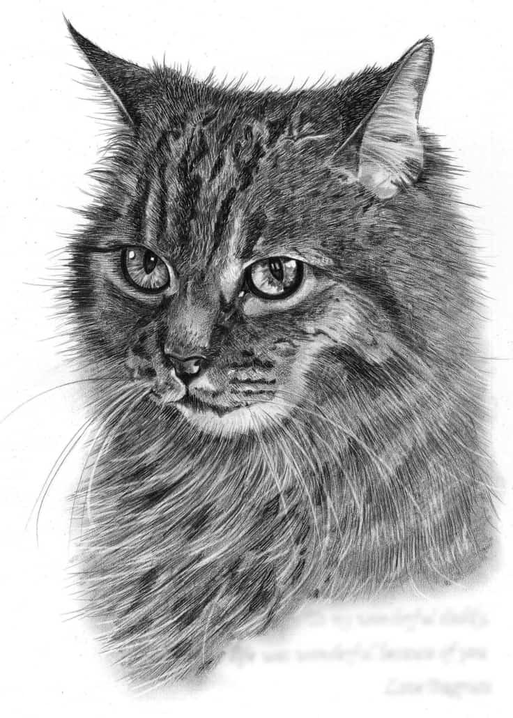 Pencil Drawing of Cat in Loving Memory