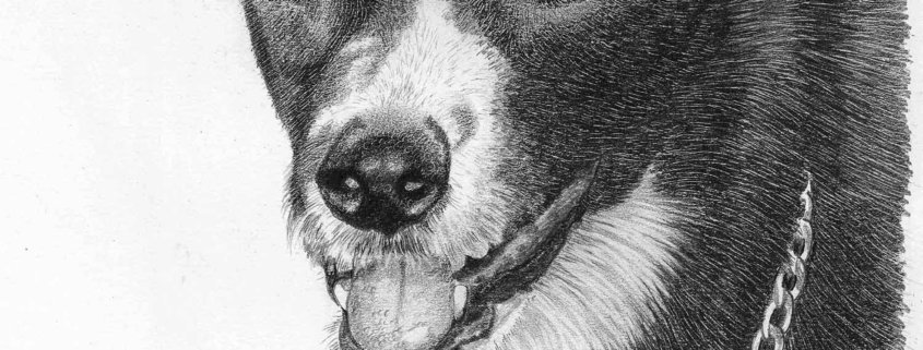 Pencil Drawing of Dog in Loving Memory