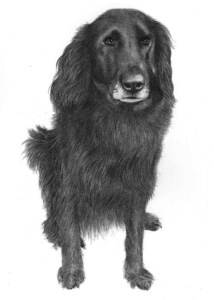 Pencil Portrait of Dog